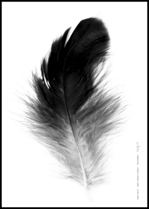 Feather no.01
