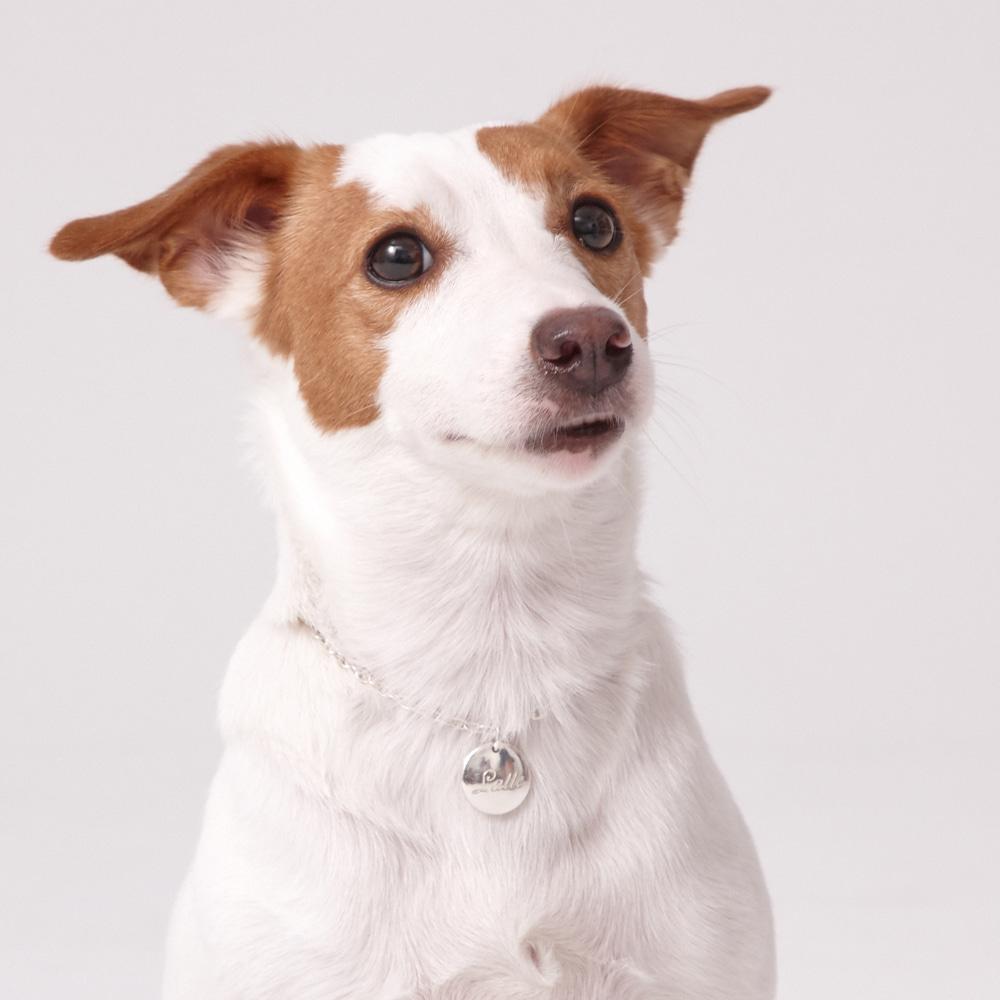 伴侣动物识别标签 - 银色现代圆形L手写项链4.0