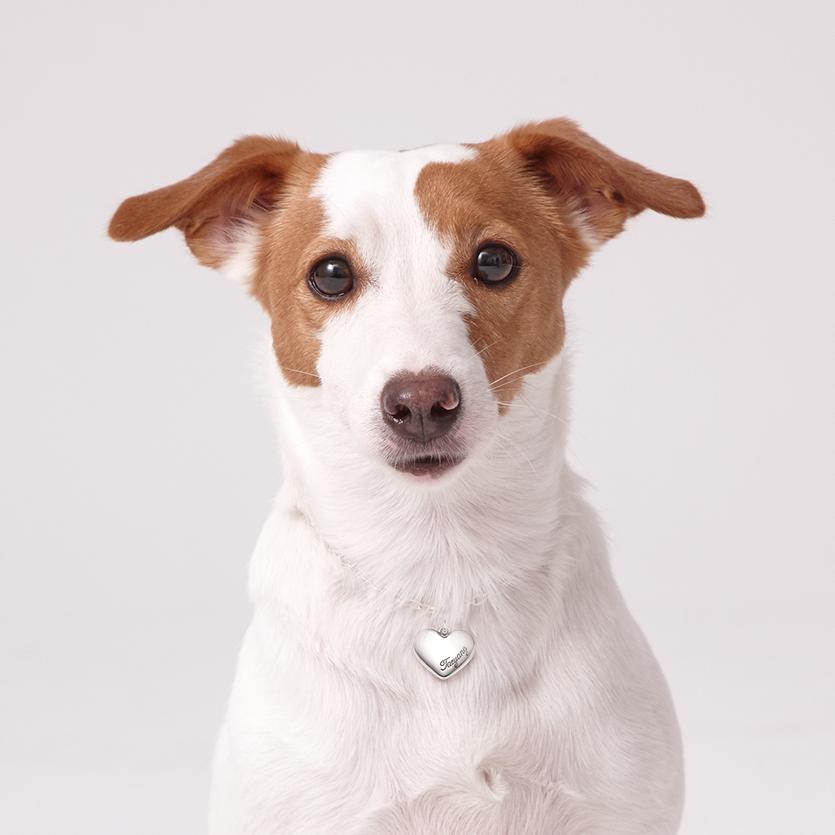 定制宠物标签 - 纯银心形项链个性化雕刻