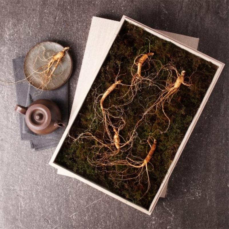화락진생 산양삼 5년근 5뿌리