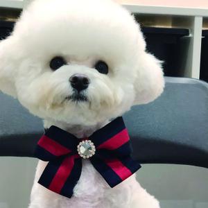 트윙클 강아지 보타이_Navy,White,Green(3Color)